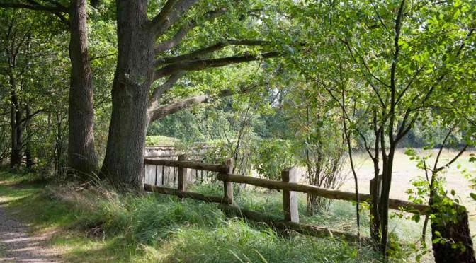 Hirsche, wilde Weiden und Krebsscheren