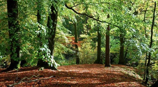 Waldherren, Baumriesen und Zimmermann