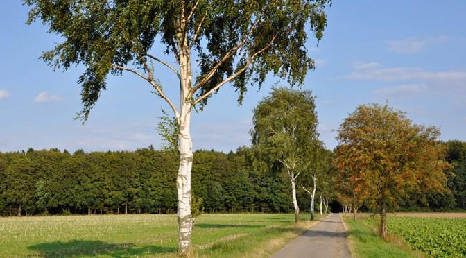 Regionalpark Rosengarten: Route 2