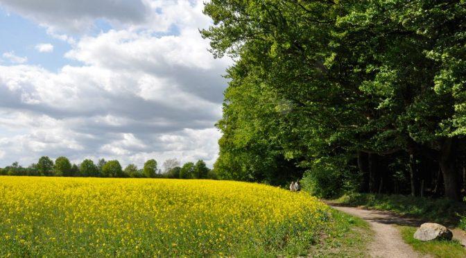 Feld am Sachsenwald