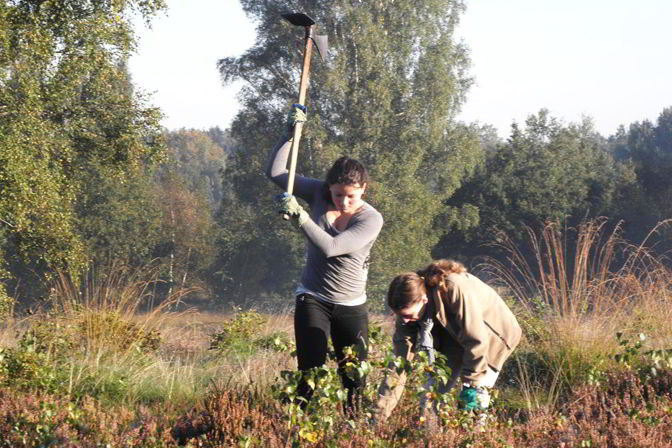 Schülerinnen entkusseln die Heide im Wittmoor