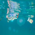 Schwimmender Plastikmüll und Qualle
