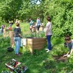 Urban Gardening im Projekt Venusgarten