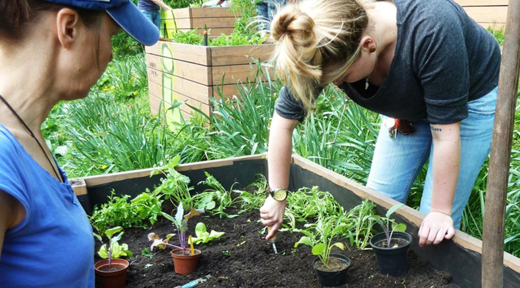 Frauen bepflanzen ein Hochbeet
