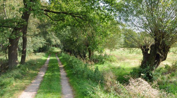 Wanderweg im Duvenstedter Brook