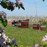 Hagenower Landpartie: Obstplantage Schwechow