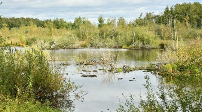 Regionalpark Wedeler Au: Route 3