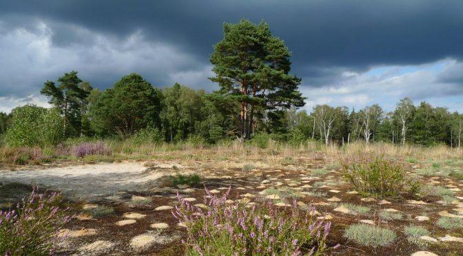Regionalpark Wedeler Au: Route 4